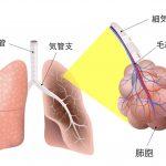 実はタバコの煙もpm2.5 ! タバコでおこる怖い肺気腫
